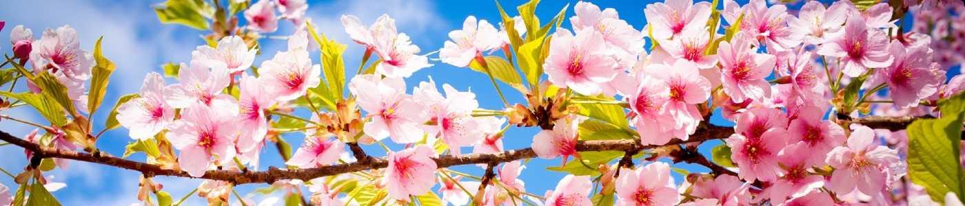 C\'est le printemps !